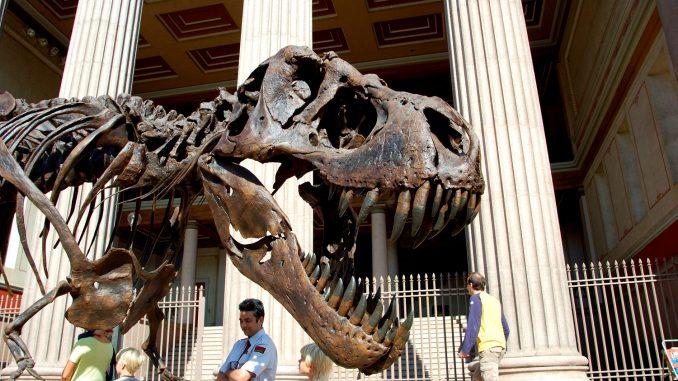 Tyrannosaurus Rex på Universitetsplassen i forbindelse med Geologiens dag. Foto: Pål Stagnes