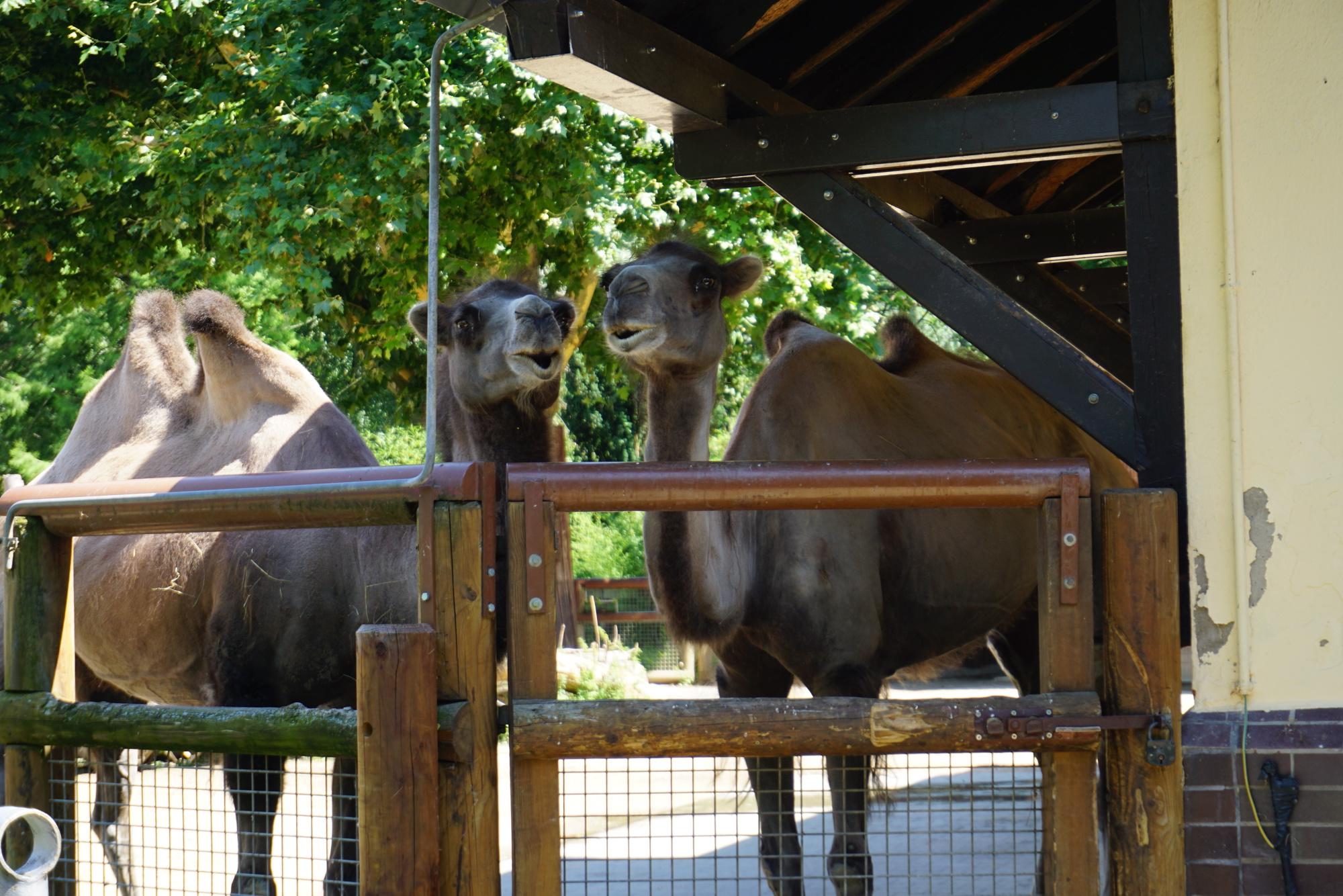 Frankfurt Zoo. Photo: Pål Stagnes